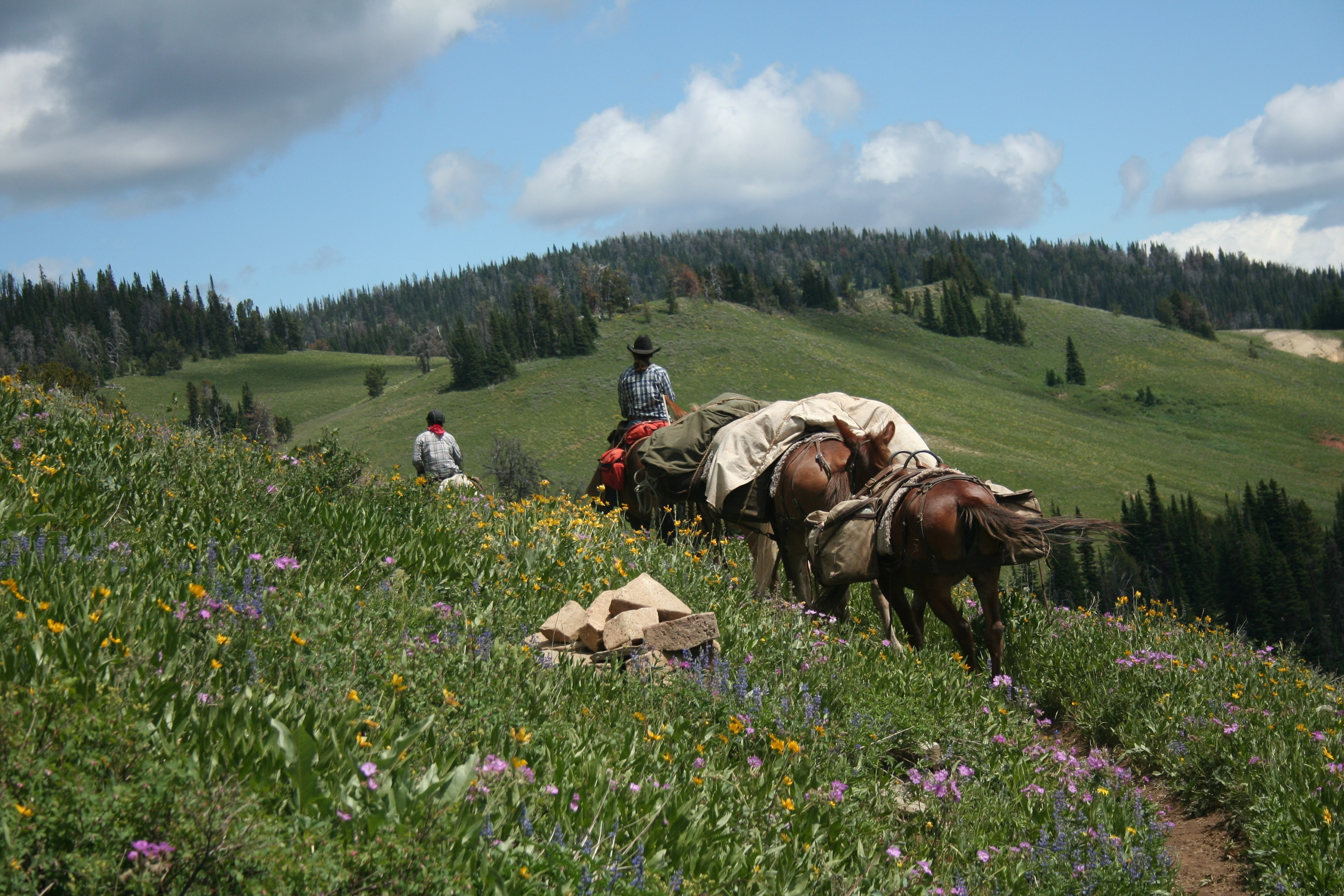 pack trips in montana covered wagon ranch