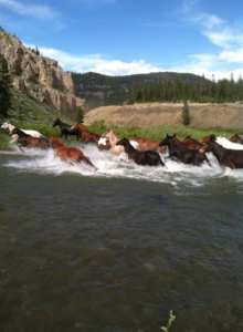 Our horses going across the Taylor Fork River!