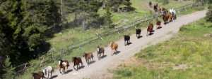 Line of horses on the road at 4UR