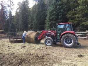 Blog - Covered Wagon Ranch (Gallatin Gateway, Montana
